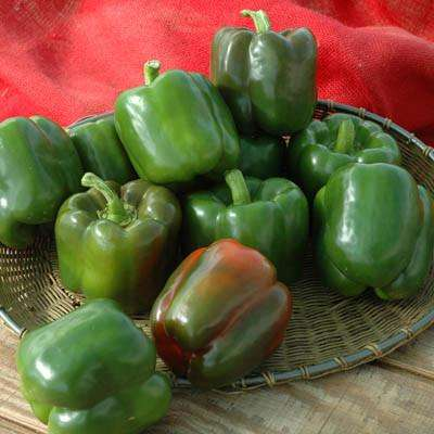 Peppers (Ace) - 6 Pack