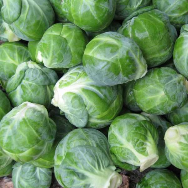 Brussel Sprouts - 6 Pack