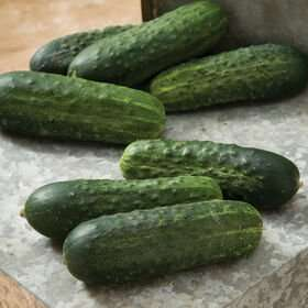 Cucumber (Pickiling) Single